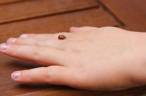 Not a tick. Not a scab.  Just a ladybug that kept landing on Clara at lunch in Prague.